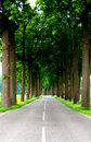 Road to success in the country Stock Images