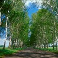 Road with trees. Royalty Free Stock Photo