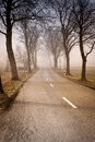 Road with trees Royalty Free Stock Image