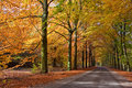 Road with trees in autumn Royalty Free Stock Photos