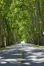 Road with trees on both sides, Uruguay Royalty Free Stock Photo