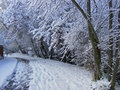 Road trees and covered with snow Stock Photography