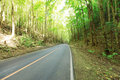 Road in the tropical rainforest Stock Photo