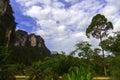Road in Tropics. Royalty Free Stock Photo