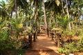 Road in the tropics. India. Goa Royalty Free Stock Photo