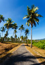 The road in tropics, palm trees Royalty Free Stock Photo