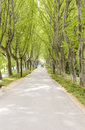 Road under trees Royalty Free Stock Photos