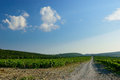 The road through the vineyard landscape with in mountains Royalty Free Stock Photography