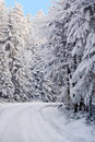 Road in white forest Royalty Free Stock Image