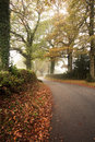 Road winding through foggy Autumn forest Royalty Free Stock Photo