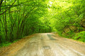 Road winds in the mountains beautiful spring forest Stock Photos