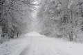 Road in winter a going through a forest the Stock Images