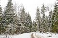 Road in a winter wood Royalty Free Stock Photography