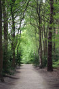 Road through the woods Royalty Free Stock Photo