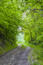 Road in the woods country Royalty Free Stock Image