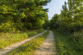 Road In Woods Royalty Free Stock Photo