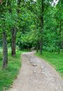 Road in the woods Royalty Free Stock Photo