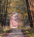 Road in woods while spring to autumn transition with beautiful orange and red tones
