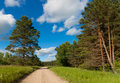 Road in the woods on a sunny afternoon summer Royalty Free Stock Image