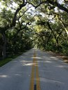 Road in Woods at Tomoka State Park in Florida. Royalty Free Stock Photo