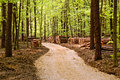 Road through the woods way forest with tree felling Royalty Free Stock Images