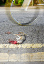 Roadkill carcass of a grey squirrel nd july sciurus carolinensis cyclist passes by kirkby in ashfield nottinghamshire england Royalty Free Stock Photo
