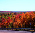 Roadside Autumn Colors - Superior National Forest Royalty Free Stock Photo