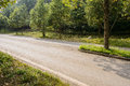 Roadside flourishing trees and plants and sunny day on Royalty Free Stock Images