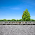 Roadside  pavement and tree Stock Image