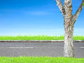 Roadside and tree view on blue sky Stock Photography