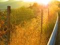 Roadside verge sunshine on and crash barrier Stock Images