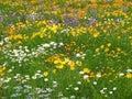 Roadside Wildflowers Royalty Free Stock Photos