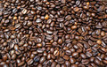 Roadsted coffee beans Stock Image