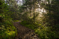 Roan Mountain, Crepuscular rays, Tennessee forest Royalty Free Stock Photo