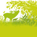 Roaring deer in a green forest Stock Photo