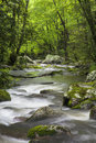 Roaring Fork Creek in the Great Smoky Mountains USA Royalty Free Stock Photo