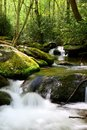 Roaring fork motor trail waters in the smoky mountains behind ephraim bales place along Stock Photo