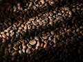 Roasted coffee beans in the shade of tonality with beam illumination. Background. Royalty Free Stock Photo