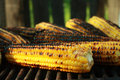 Roasted Corn Royalty Free Stock Photo