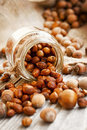 Roasted hazelnuts jar toppled on wooden background Royalty Free Stock Image