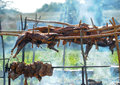 Roasted lamb carcass of a sheep on vertle Royalty Free Stock Photography