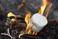 Roasting marshmallow Royalty Free Stock Photo