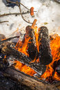 Roasting wieners over campfire on tree branches a bonfire Royalty Free Stock Images