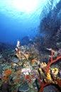 Roatan Reef 1986 Lizenzfreie Stockfotos