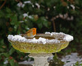 Robin on bird bath in snow Royalty Free Stock Photo