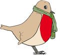 Robin scarf bird wearing green Royalty Free Stock Images
