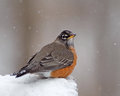 Robin in snow Royalty Free Stock Images