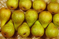 Robust ripe pears in autumn Royalty Free Stock Photos
