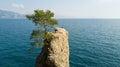 The Rock of Cadrega, maritime pine tree, aerial view, waterfront between Santa Margherita Ligure and Portofino Liguria, Royalty Free Stock Photo