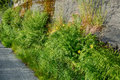 Rock covered with fern grass and flowers norway summer ferns small bushs yellow Stock Photos